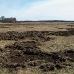 Vello Vallimaa foto metssigade tekitatud kahjustusest Saaremaal