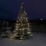 Koduaia jõulukuusk