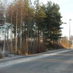 Mänguväljaku asukohas on hetkel hulk täisealisi puid ja võsa